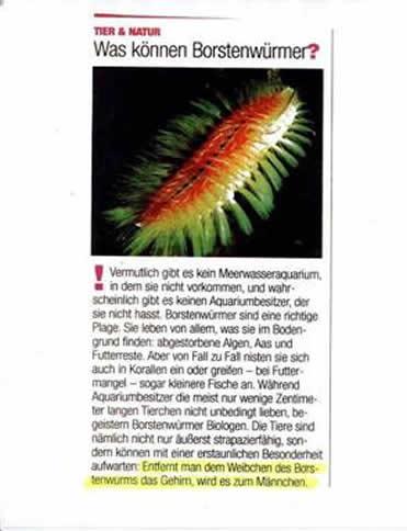 Was können Borstenwürmer